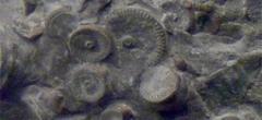 Ученые нашли машину возрастом 400 миллионов лет